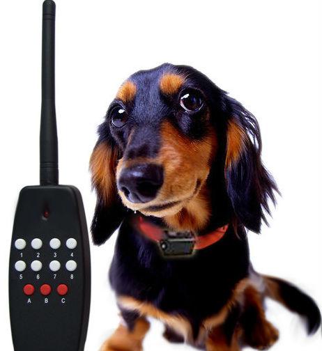 Пульт управления собакой - собака робот - собака с пультом